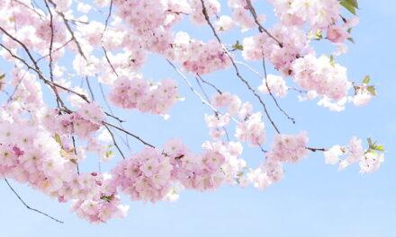 Yōkoso Zenspiration ! Clariant takes inspiration from J-Beauty!
