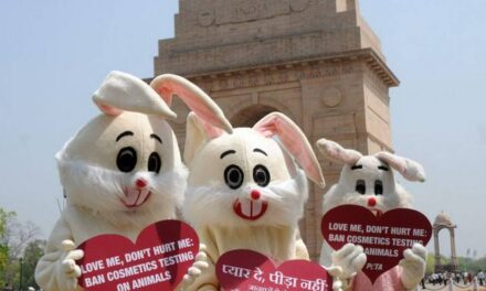 India enforces a stringent ban on animal-tested cosmetics